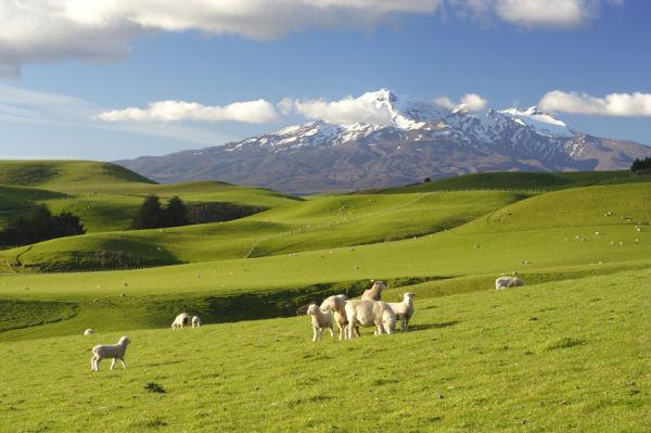 Photo de la nouvelle-Zélande