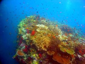 iles-fidji-coraux