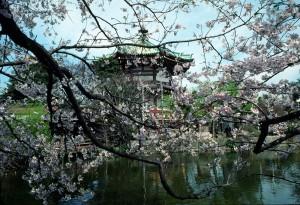 tokyo-activités-parc-ueno