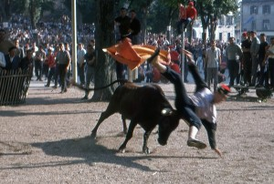 Course de vaches pendant les Fêtes de Bayonne