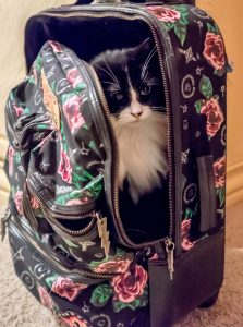 chat-bagage